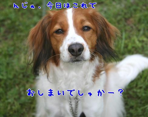d0013149_0414723.jpg