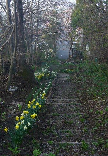 2007春の朝_c0062295_602540.jpg