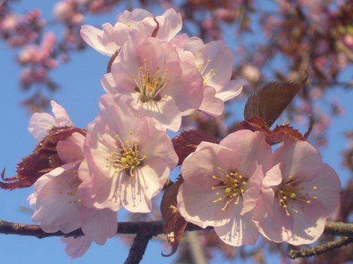 2007春の朝_c0062295_65262.jpg