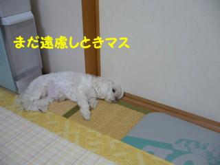 f0005727_1610334.jpg