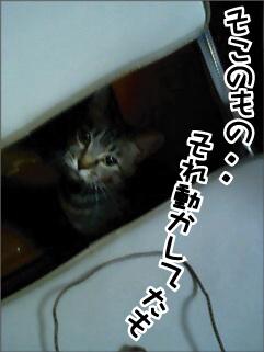 c0012445_7584850.jpg