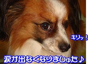 f0011845_2311466.jpg