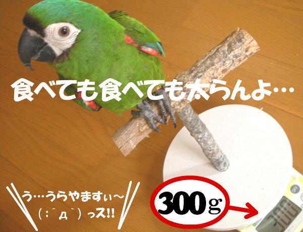 f0132055_019935.jpg