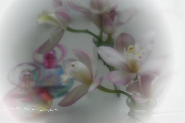 f0131365_18194314.jpg