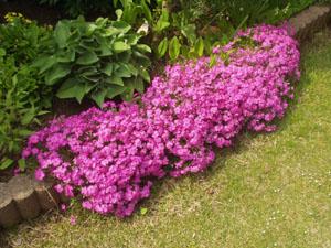 春の庭_b0058290_17114810.jpg