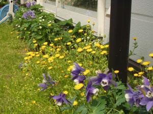 春の庭_b0058290_17135259.jpg