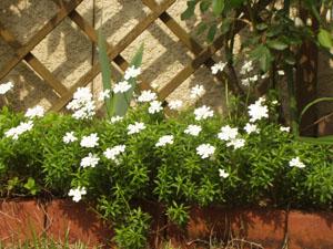 春の庭_b0058290_17152378.jpg