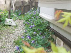 春の庭_b0058290_17161451.jpg