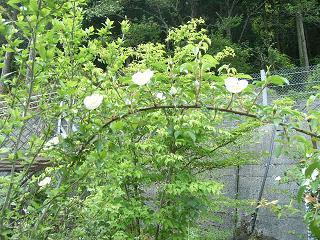 彼女の愛した5月の庭_d0087595_15253950.jpg