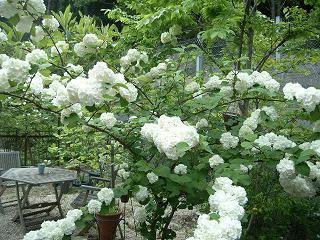 彼女の愛した5月の庭_d0087595_15263582.jpg
