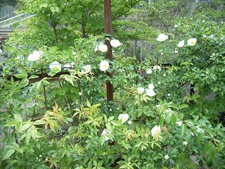 彼女の愛した5月の庭_d0087595_16373046.jpg