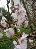 ようやく咲きました。_f0096216_1820615.jpg