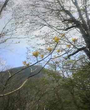 登山道より  丸笹山を望む_c0089831_10425477.jpg