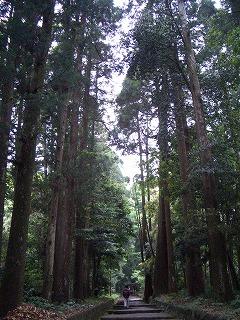 狭野神社の杉並木_f0105533_23415052.jpg