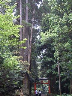 狭野神社の杉並木_f0105533_23444182.jpg