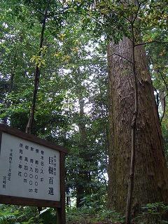 狭野神社の杉並木_f0105533_2345075.jpg