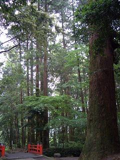 狭野神社の杉並木_f0105533_23453830.jpg