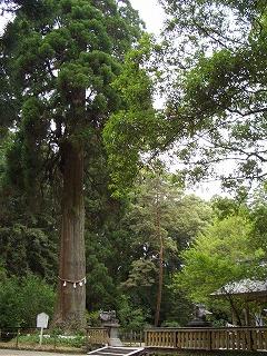 狭野神社の杉並木_f0105533_23463655.jpg