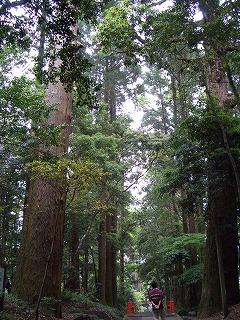 狭野神社の杉並木_f0105533_23465764.jpg