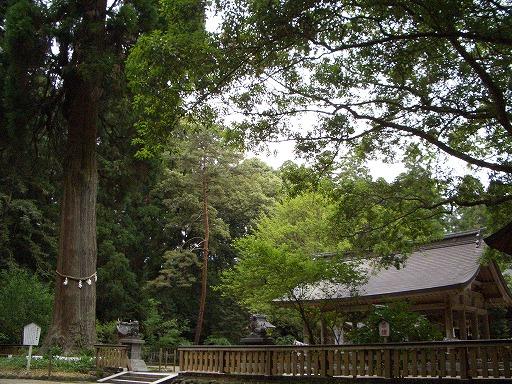狭野神社の杉並木_f0105533_23521142.jpg