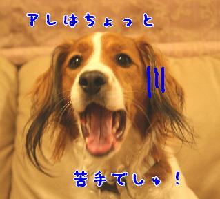d0013149_0512715.jpg
