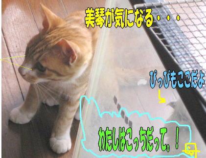 f0082367_931178.jpg