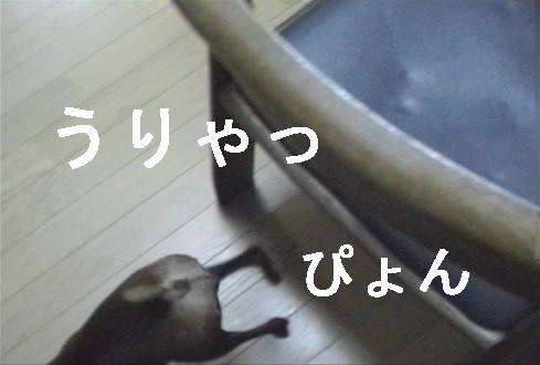 f0123589_17101125.jpg