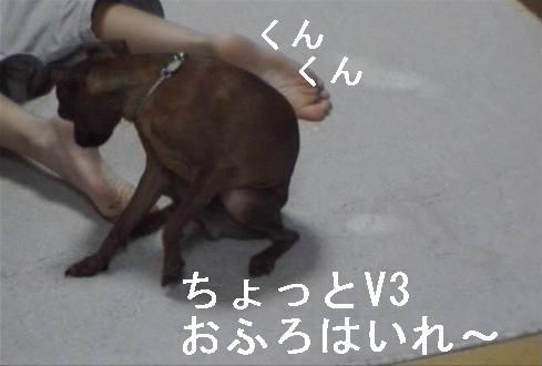 f0123589_17213745.jpg