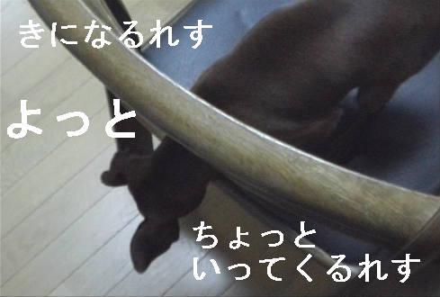 f0123589_1795252.jpg