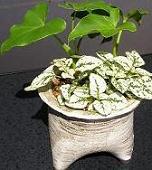どれにしようと迷ってしまう キュートな植木鉢♪_e0063296_2322672.jpg