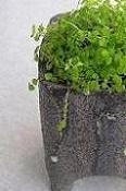 どれにしようと迷ってしまう キュートな植木鉢♪_e0063296_234936.jpg