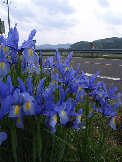 春遍路 第2弾 4月13日_c0049299_19153633.jpg