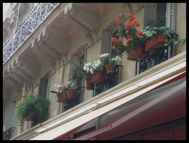 ■窓(パリ)_a0008105_515276.jpg