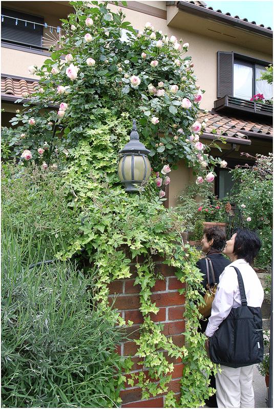 三田市オープンガーデン_c0042324_23134826.jpg