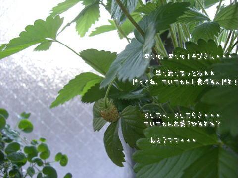 f0056129_18352834.jpg