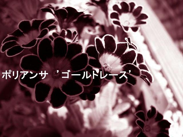 f0099535_16542135.jpg