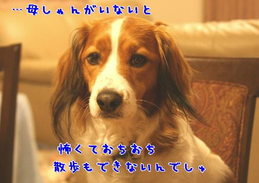 d0013149_21263294.jpg