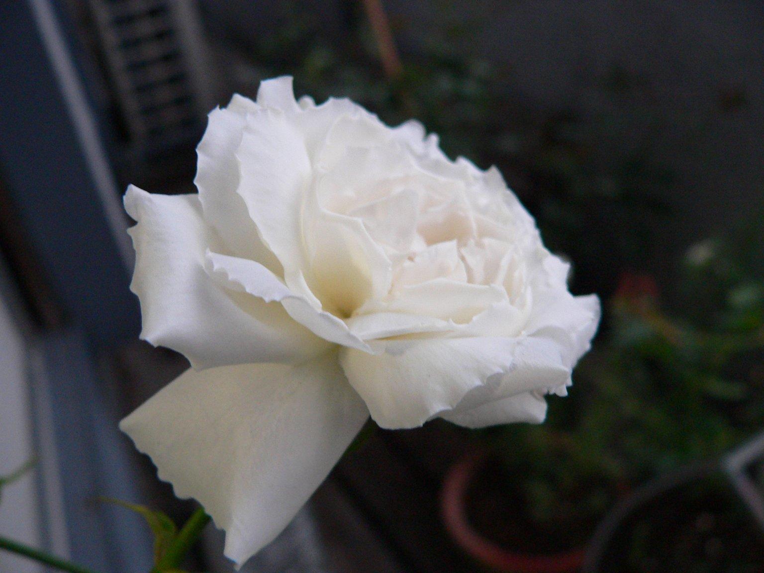 f0121964_039191.jpg