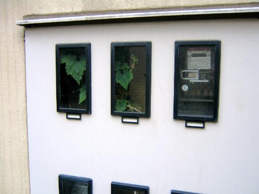 裏:ボックスの中の植物_f0091067_14293749.jpg