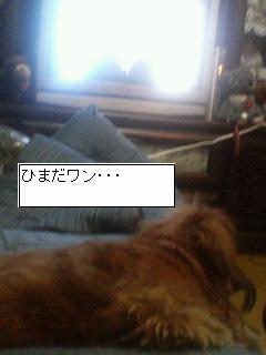 a0047175_2304055.jpg