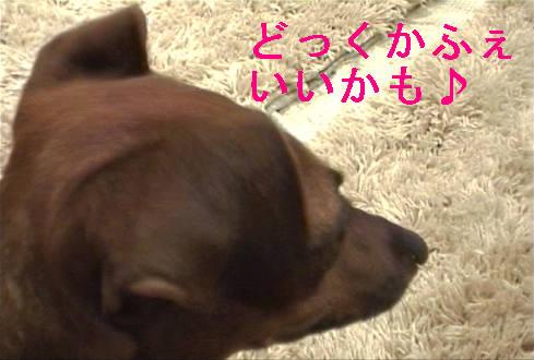 f0123589_1746968.jpg