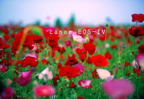 f0046897_22363856.jpg