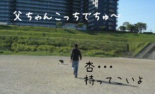 今朝の杏_f0068501_957793.jpg