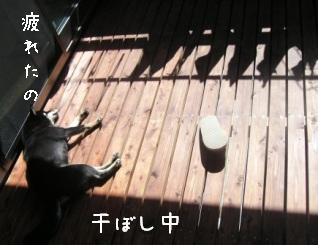 今朝の杏_f0068501_9593053.jpg