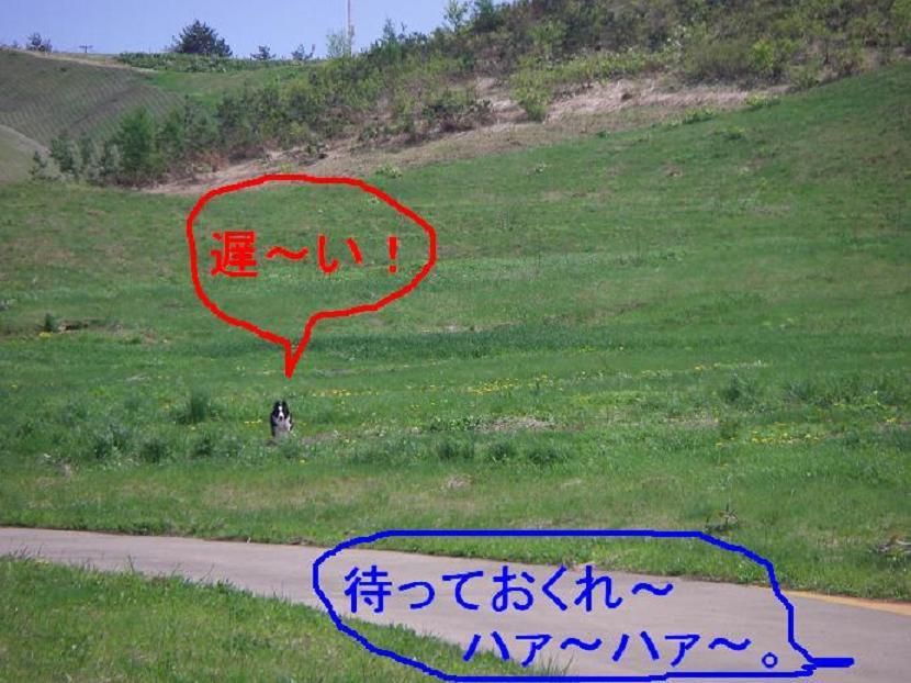 d0122403_1510864.jpg
