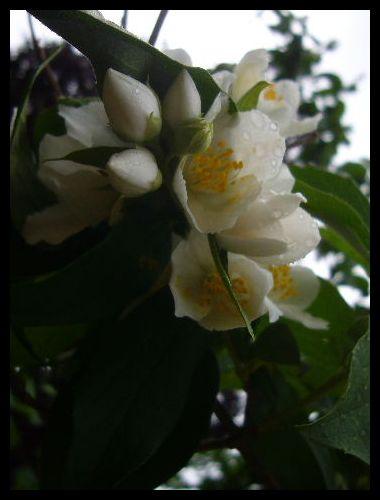 ■公園の花(パリ)_a0008105_2203230.jpg