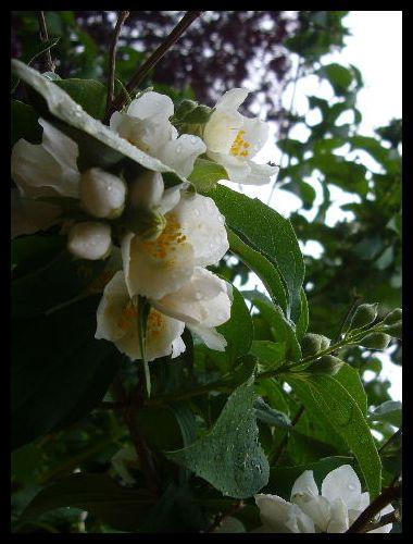 ■公園の花(パリ)_a0008105_22079.jpg