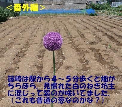 f0121712_1791827.jpg