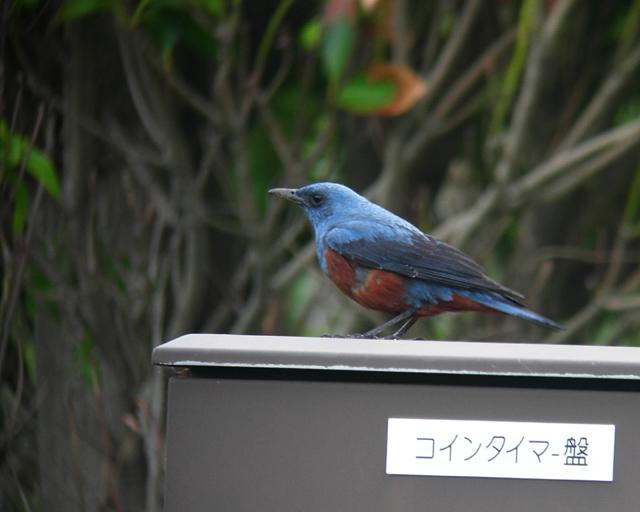 カワセミ_d0074828_0243588.jpg