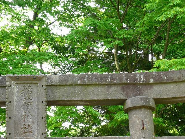 新緑の鶴ヶ城_f0032130_20463972.jpg